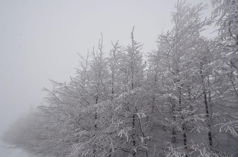冬の美ヶ原高原 霧氷の森