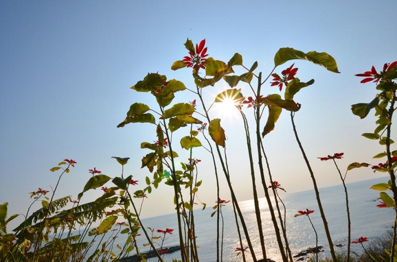 堀切峠の花
