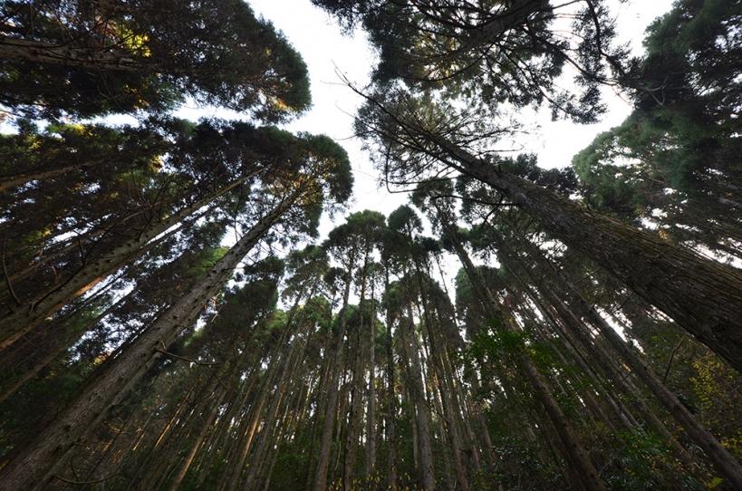 姥ヶ嶽神社
