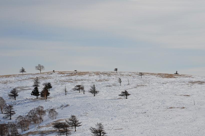 美ヶ原高原 冬の丘 3