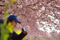 アウトドアコーヒー 桜