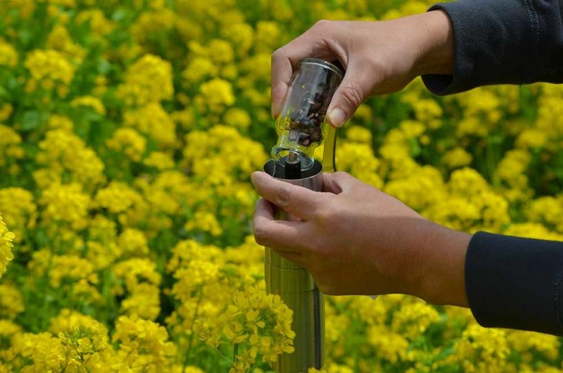 アウトドアコーヒー 菜の花畑 1