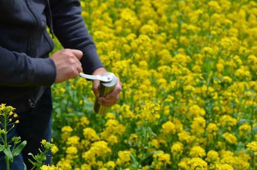 アウトドアコーヒー 菜の花畑 3