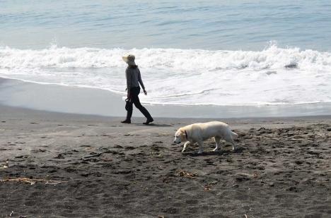 稲村ケ崎 3 犬の散歩