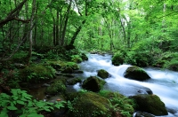 奥入瀬渓流 石ヶ戸の瀬