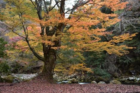 アウトドアコーヒー 浄蓮の滝付近の秘密の場所-TRIPDRIP-02